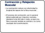 contracci n y relajaci n muscular