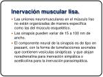 inervaci n muscular lisa