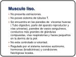 musculo liso