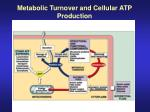 metabolic turnover and cellular atp production