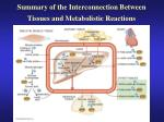 summary of the interconnection between tissues and metabolistic reactions