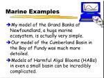 marine examples
