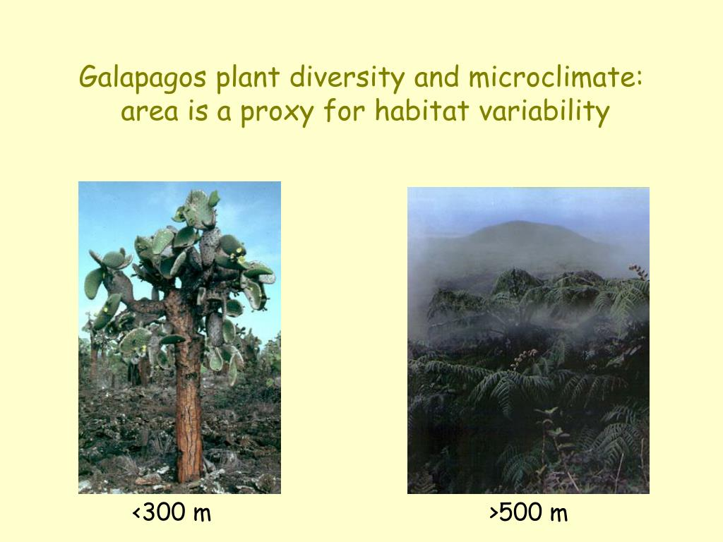 Galapagos plant diversity and microclimate: