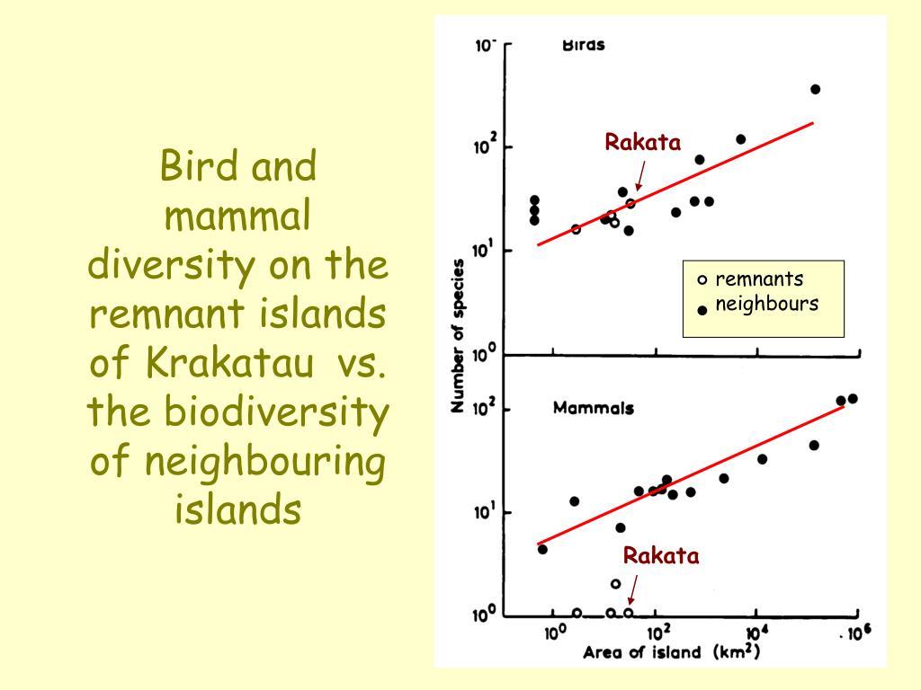 Bird and mammal