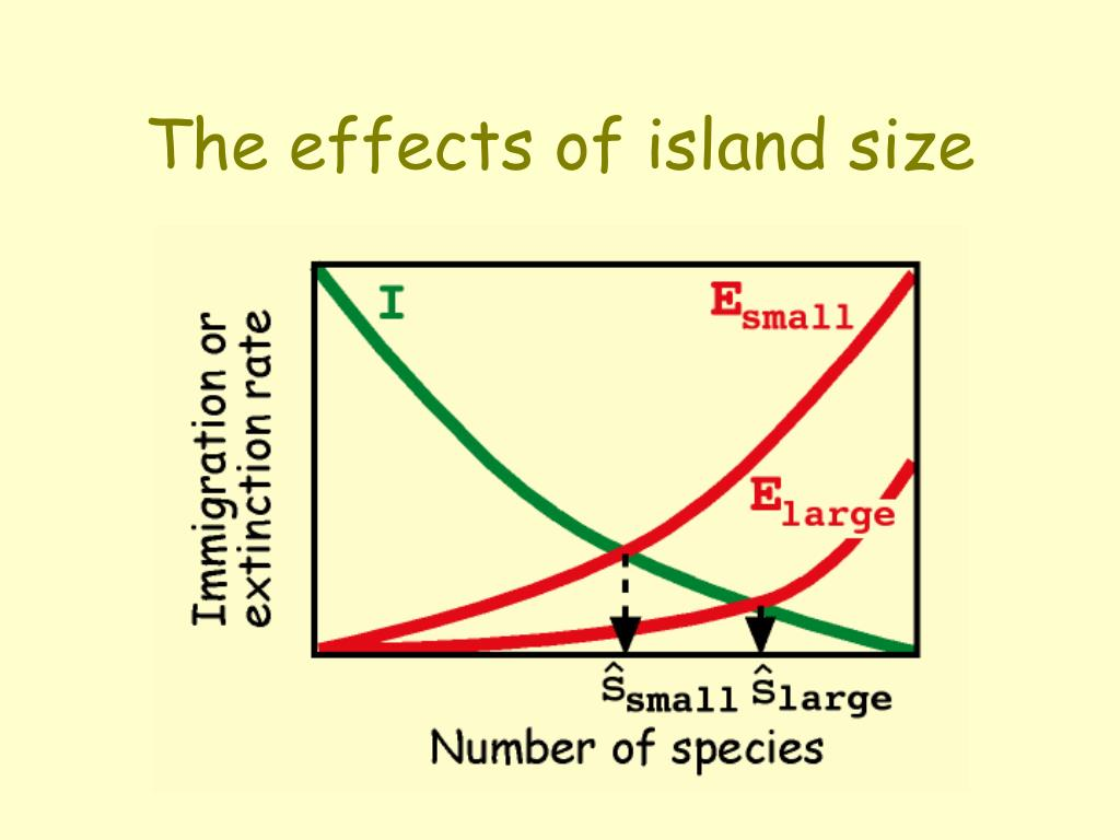 The effects of island size