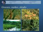grasses rushes shrubs