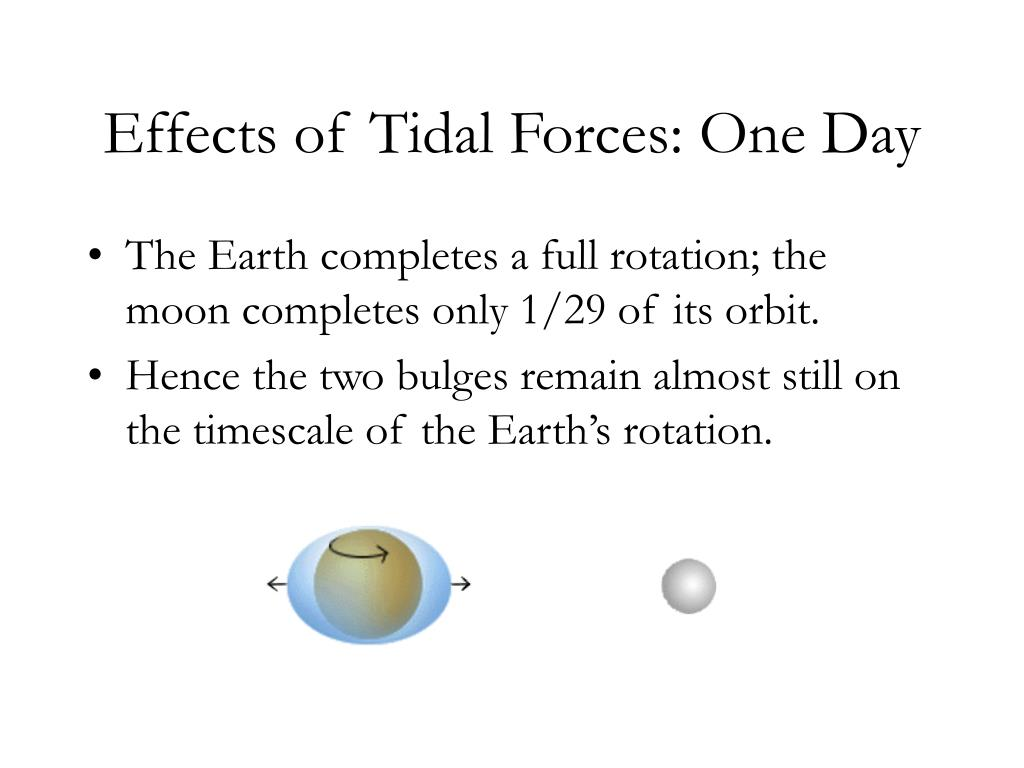 Effects of Tidal Forces: One Day