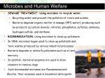 microbes and human welfare1