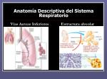 anatom a descriptiva del sistema respiratorio3
