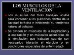 los musculos de la ventilacion