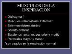 musculos de la inspiracion