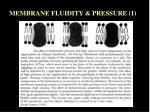 membrane fluidity pressure 1
