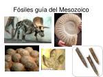 f siles gu a del mesozoico