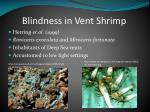 blindness in vent shrimp