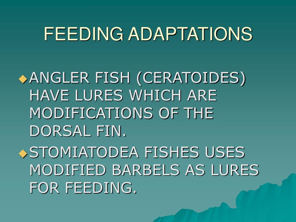FEEDING ADAPTATIONS