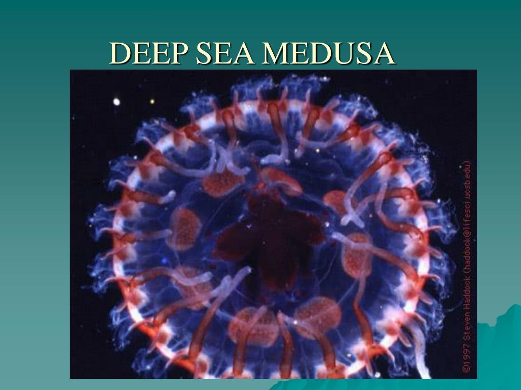 DEEP SEA MEDUSA