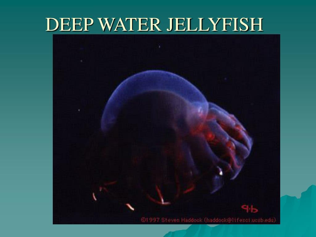 DEEP WATER JELLYFISH