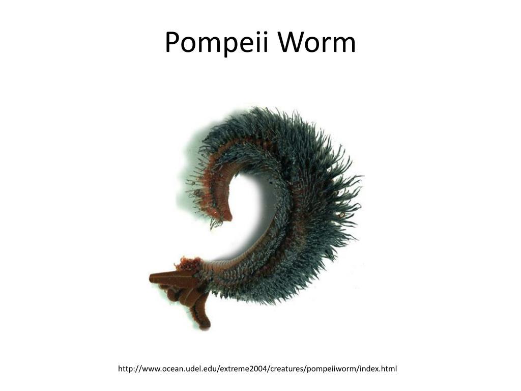 Pompeii Worm