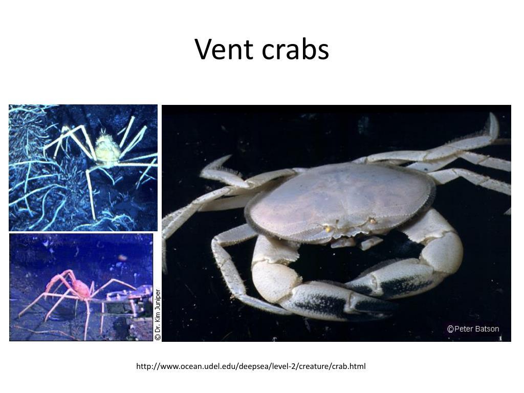 Vent crabs