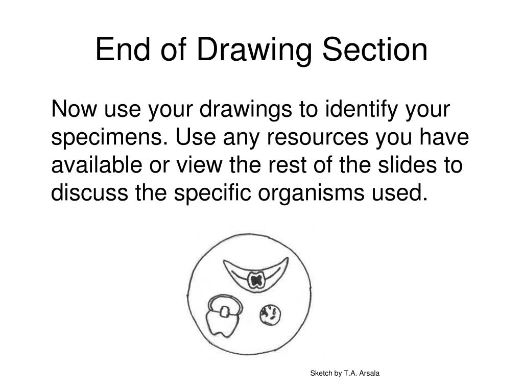End of Drawing Section