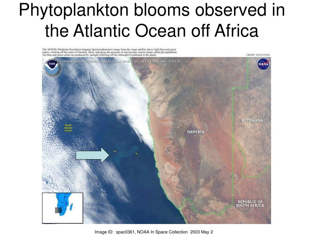Phytoplankton blooms observed in the Atlantic Ocean off Africa
