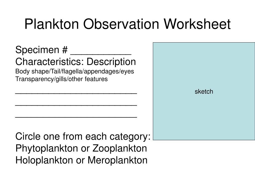 Plankton Observation Worksheet