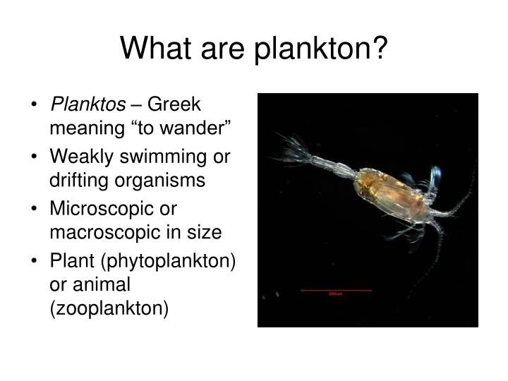 What are plankton