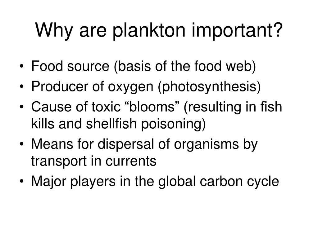 Why are plankton important?