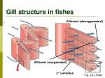 gill structure in fishes1