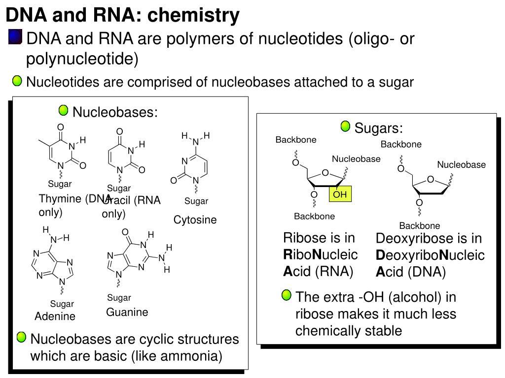 DNA and RNA: chemistry