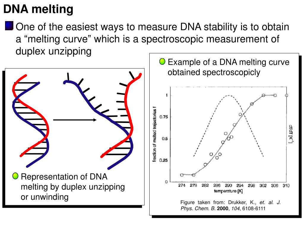 DNA melting