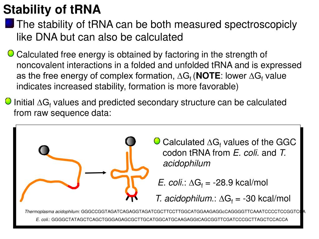 Stability of tRNA