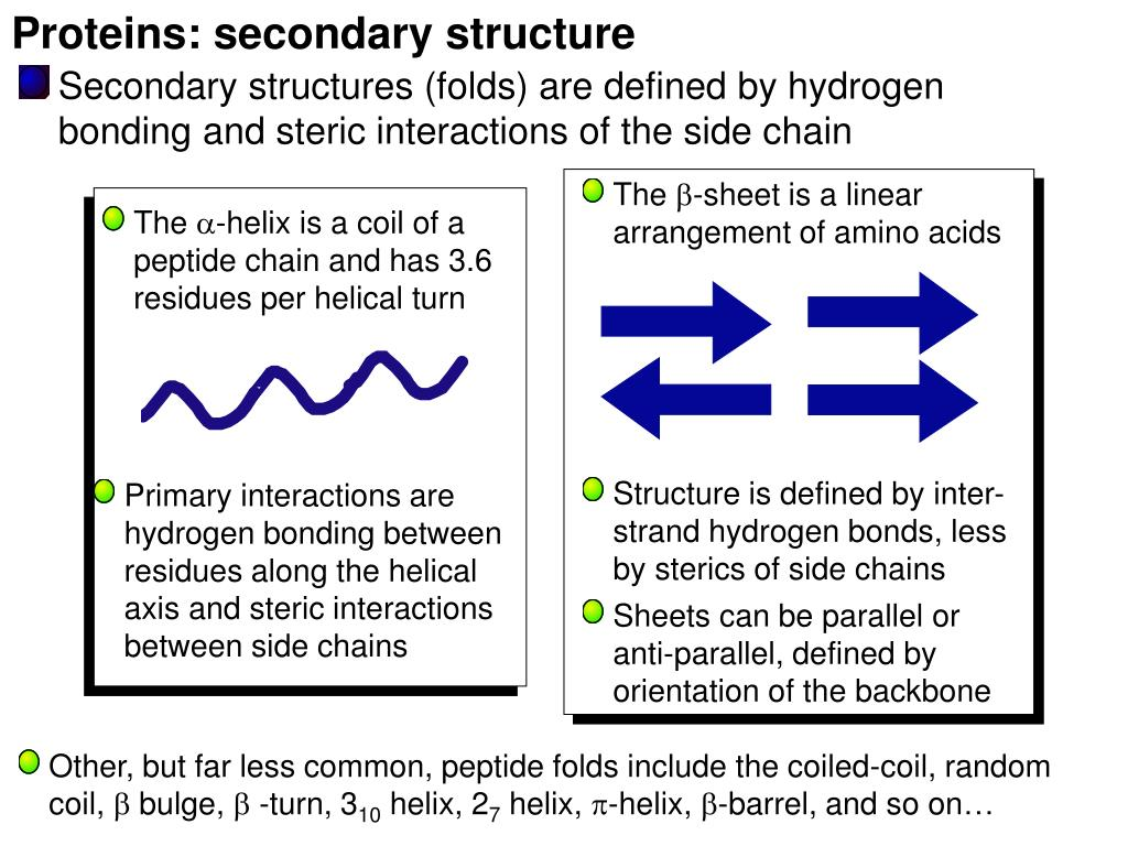 Proteins: secondary structure