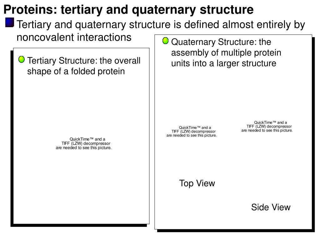 Proteins: tertiary and quaternary structure