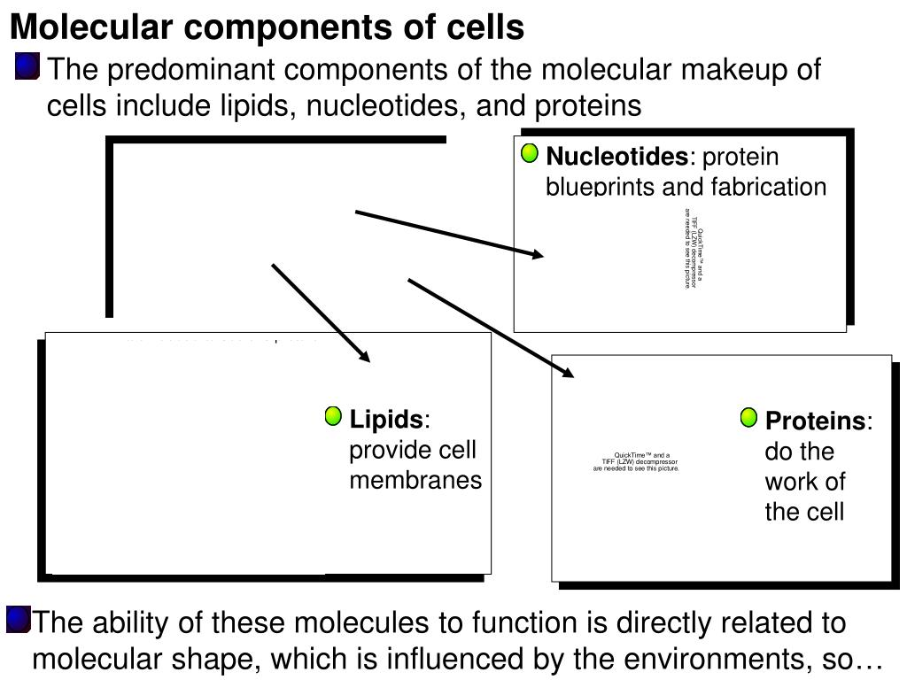 Molecular components of cells