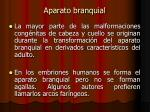 aparato branquial1