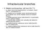 infraclavicular branches1
