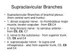 supraclavicular branches