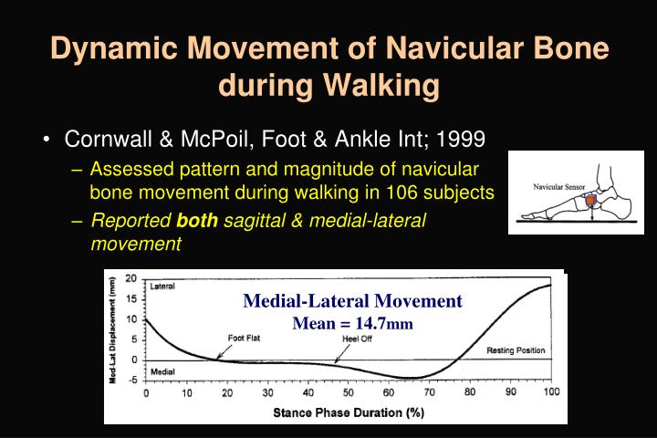 Dynamic Movement of Navicular Bone during Walking
