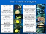 the 13 reef fish analyzed