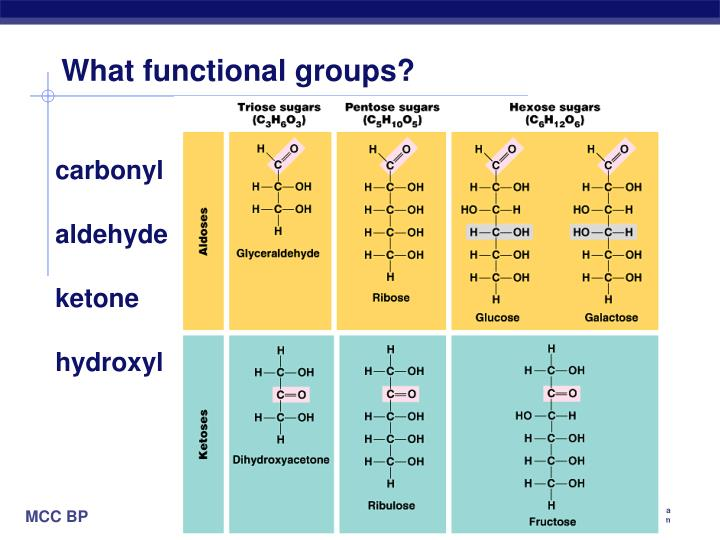 What functional groups?