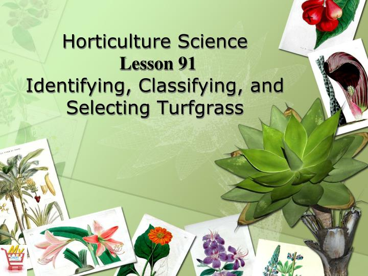 horticulture science lesson 91 identifying classifying and selecting turfgrass n.