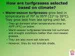 how are turfgrasses selected based on climate6