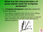 what are the characteristics of grass plants used for turfgrass purposes1