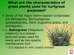 what are the characteristics of grass plants used for turfgrass purposes6