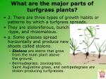 what are the major parts of turfgrass plants2
