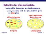 selection for plasmid uptake