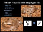 african house snake staging series