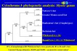 cytochrome b phylogenetic analysis myotis genus