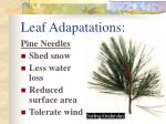 leaf adapatations